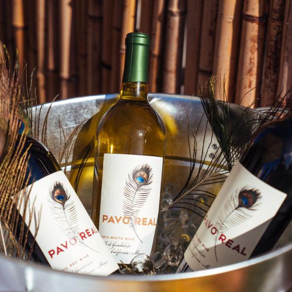 Pavo-Wine-2-600x600.jpg