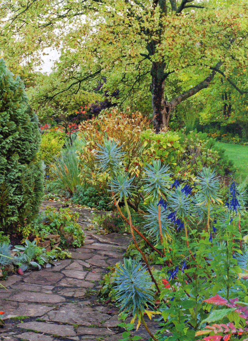 East Lambrook Mannor Gardens EG001-3.jpg