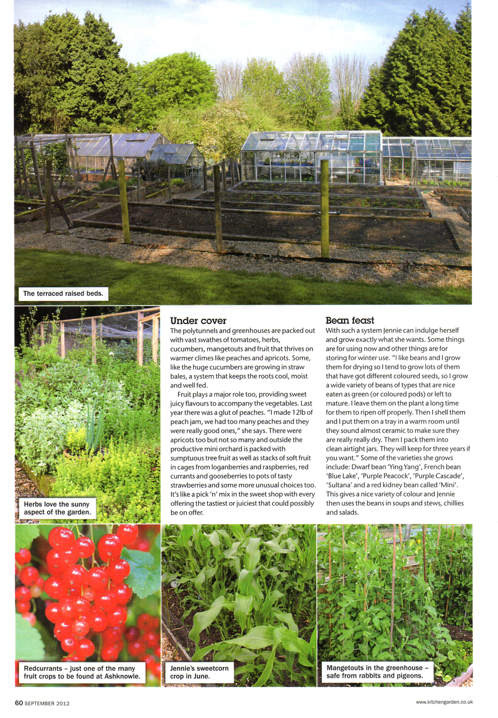 Kitchen Garden-Ashknowle-3.jpg