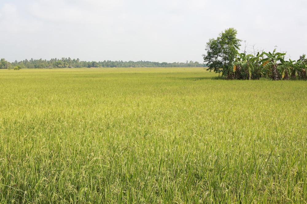 Soil7.jpg