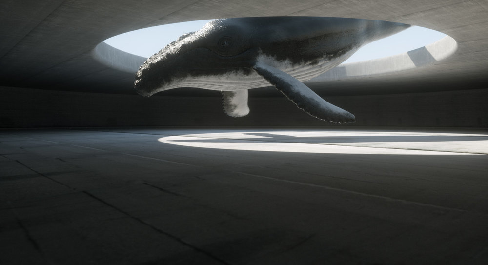 balena torna a casa.jpg