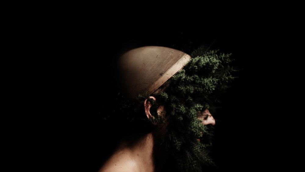 canio_alberi_1_stretta0216.jpg