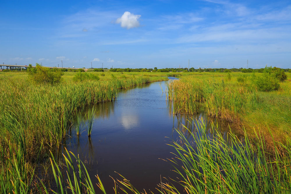 Freeport wetlands. Credit: Randall Pugh.