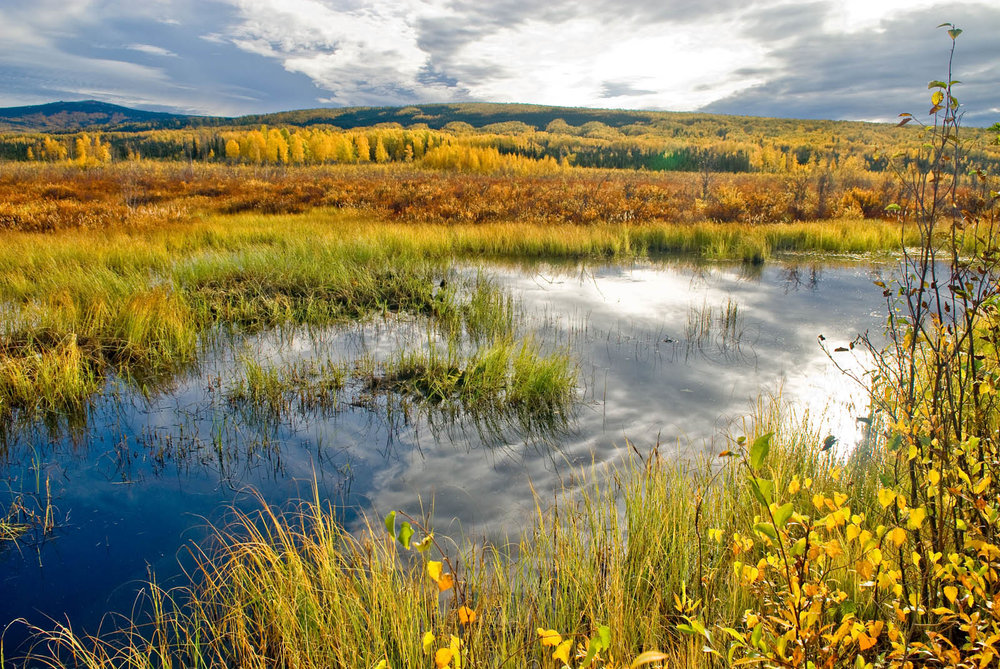 epa_wetlands.jpg