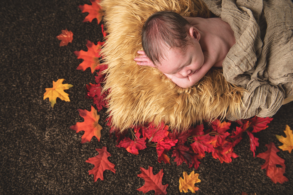 baby boy with fall leaves - Redding Newborn photographer - Dani D Photography