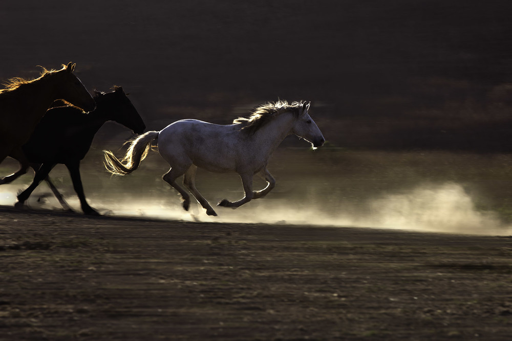 White Mare Running_Blog Size-7381.jpg