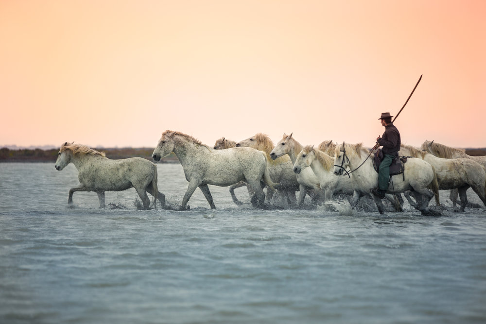 White Camargue Horses_2-3.jpg