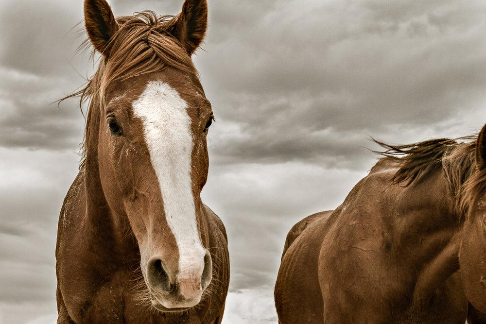 Horse Drive_9679_-2.jpg
