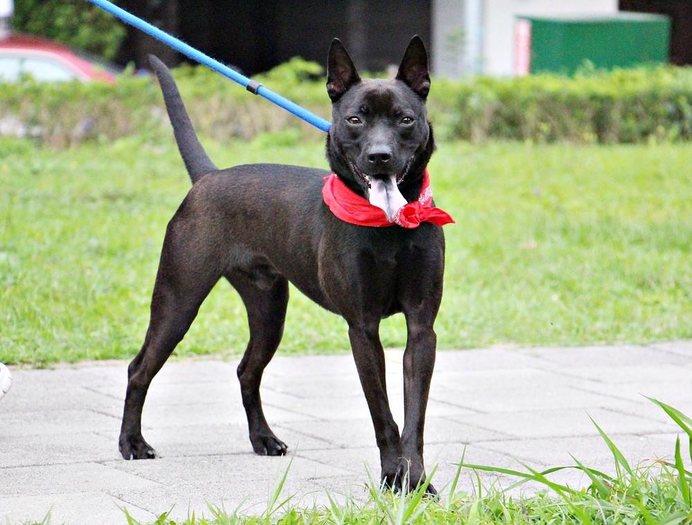 Doggy 15.JPG