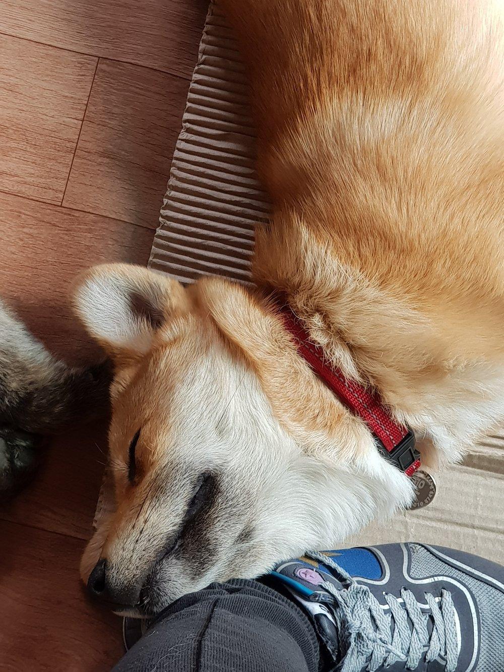 Nuri-sleeping.jpeg