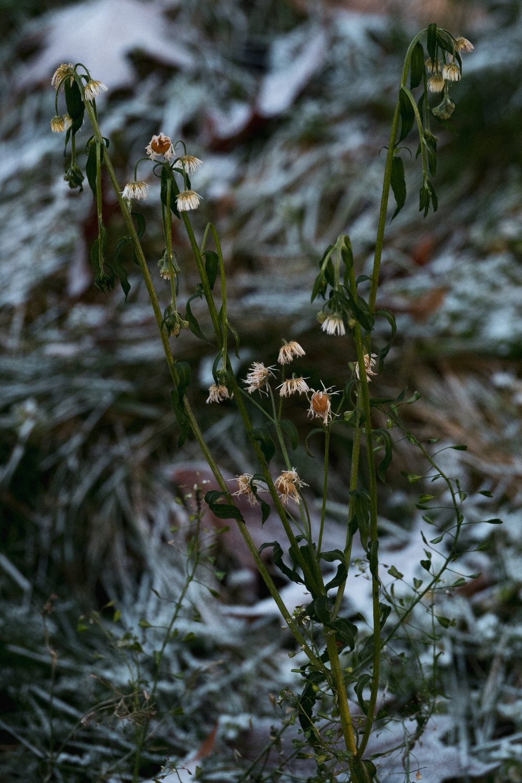 Poland_flowers.jpg