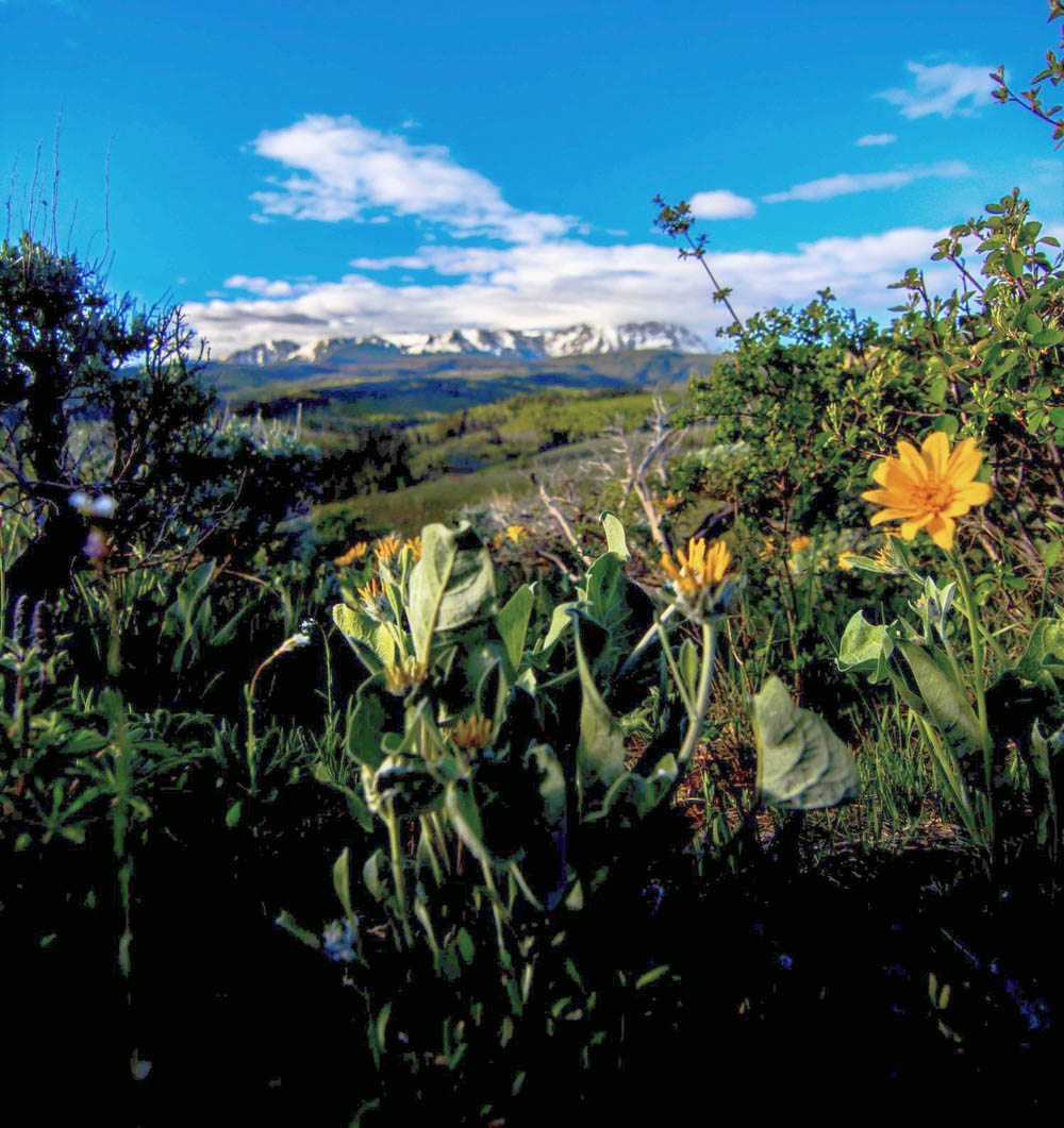 Montaine-Flowers-Near-Gore-Range-Colorado-Rockies-at-Shadow-Creek-Ranch.jpg