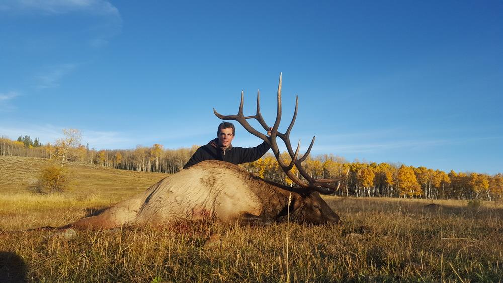 bull-elk-hunt-on-premesis-at-shadow-creek-ranch-near-silverthorne-colorado.jpg