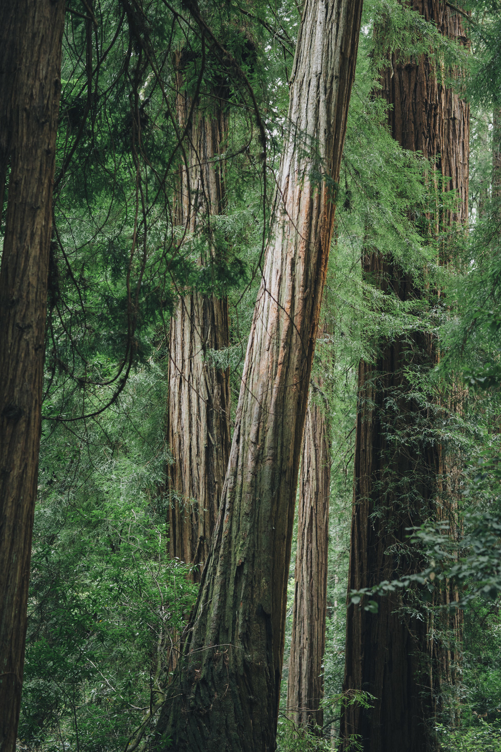 L+S_muir woods_low res-003.jpg