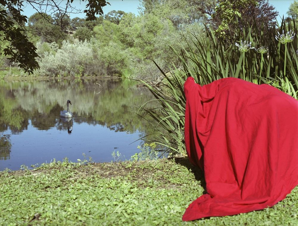 Red Thread Swan_Lawrence web.jpg