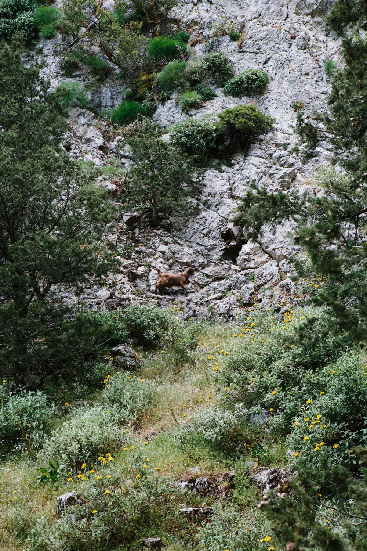 crete_lawrence-186.jpg