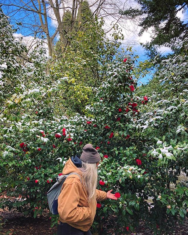 Seasons collide ft. @goodfightherbco & snowy camellias ❣️