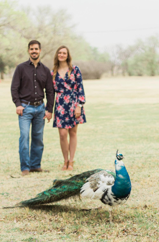 colorado springs colorado denver estes park rocky mountain elopement engagement wedding photographer photography