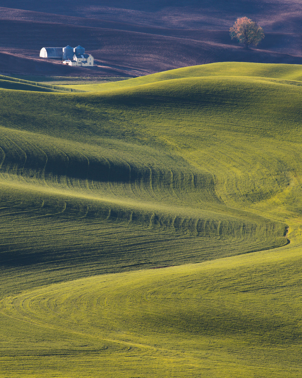 Sunrise in the Palouse