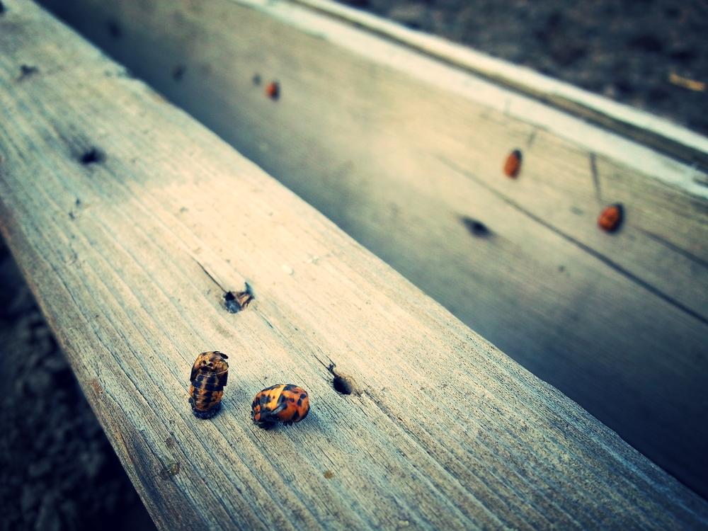 beetles wood.jpg