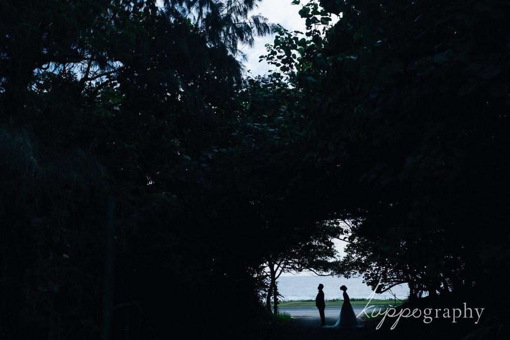 沖縄の森でシルエット写真