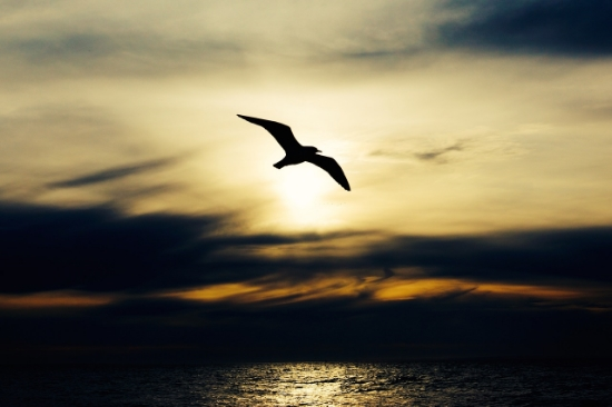 The bird can't control how the wind blows. It simply chooses to open its wings and give into what is...