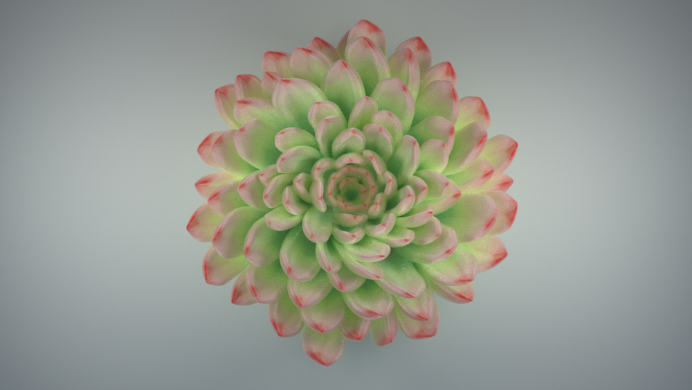 Flower_A.png