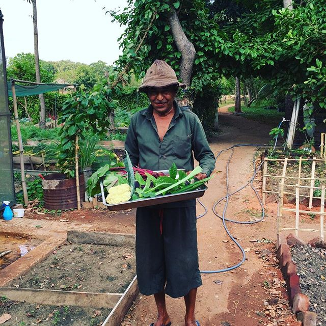 A walk in the garden 🌱🍆🍅 #farmtotable #privatechef #garden #walk #srilanka #latergram #organic #fresh #healthy #curry #intheworks #chef #figtoforkontheroad