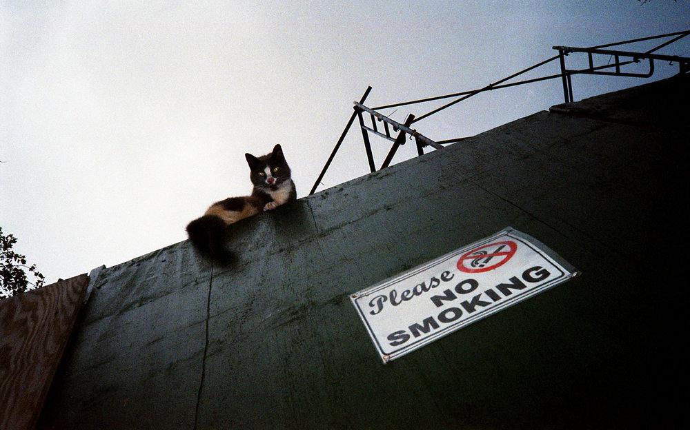 please no smoking.jpg