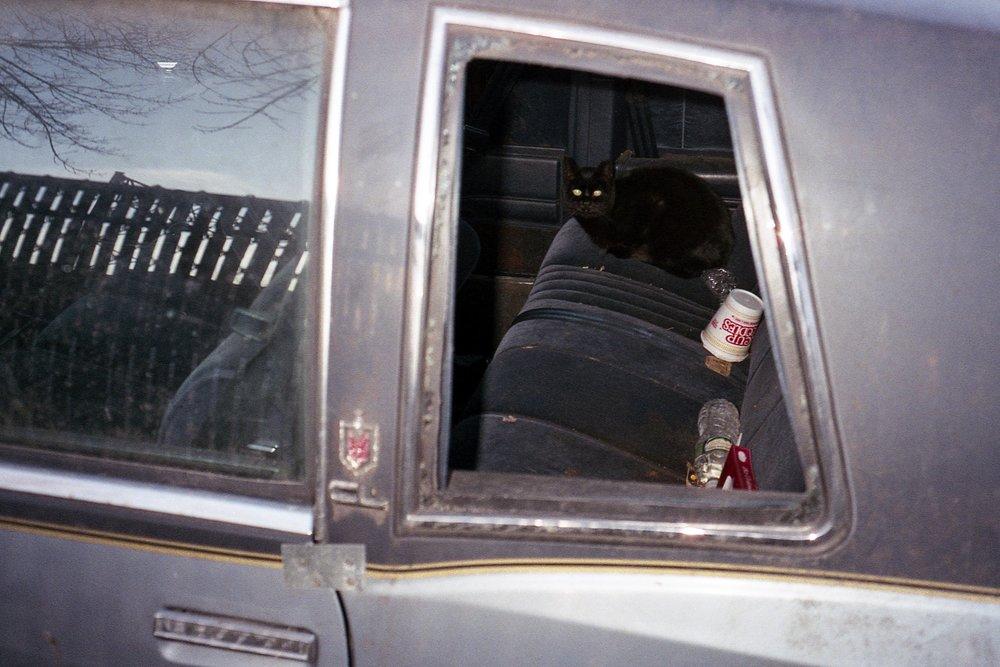 cat in car.jpg