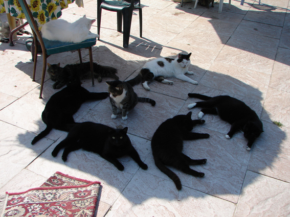 cat-picture-cats-lounging-tjflex21