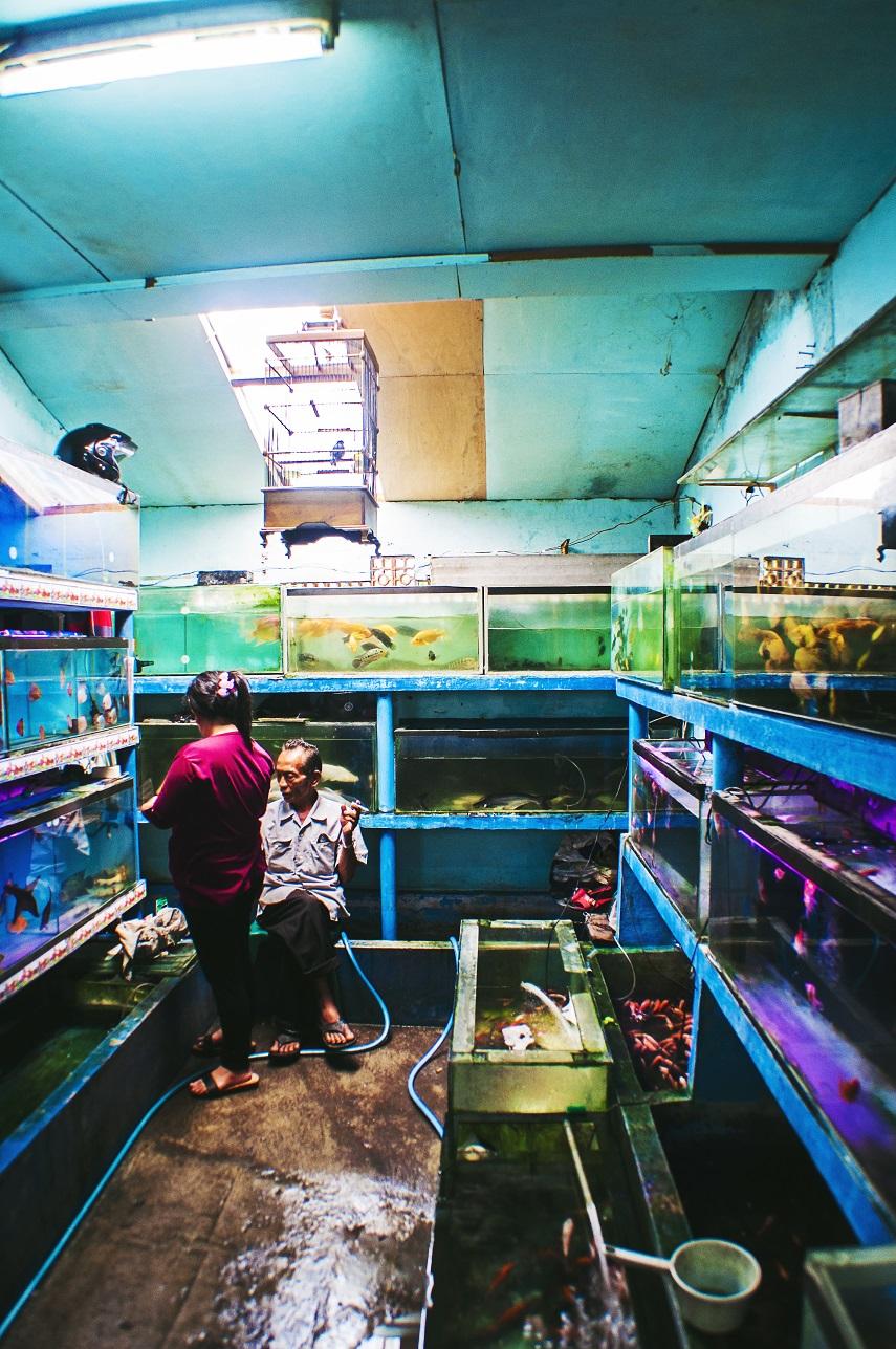 Fish Shop2.jpg