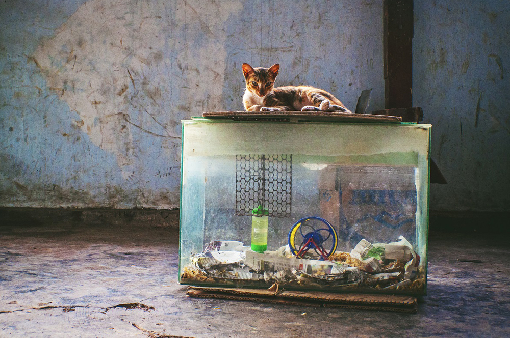 Cat on Aquarium2.jpg