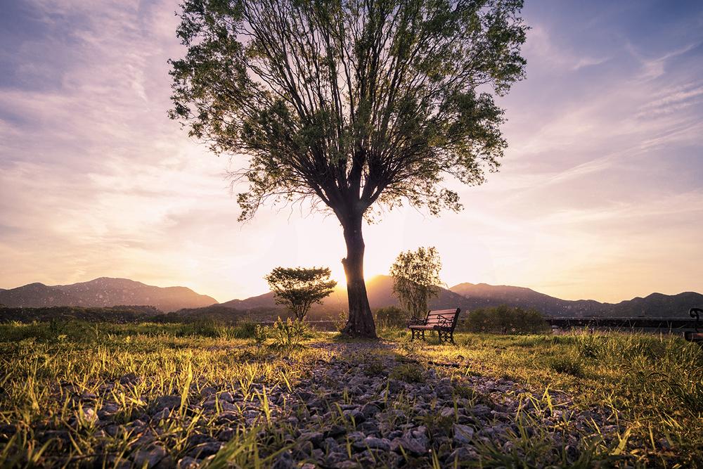 The Lone Tree (Highlights: Magenta)
