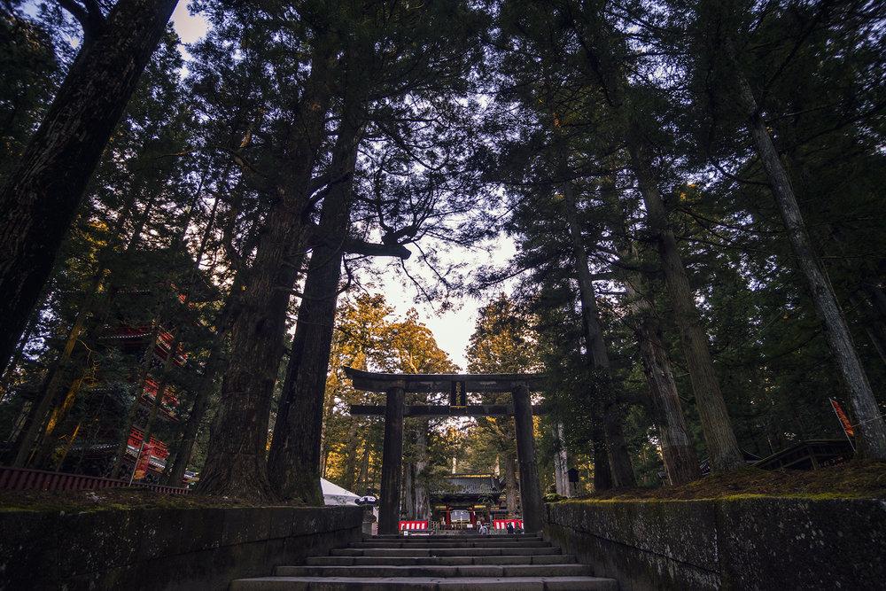 "Nikko Torii (Coordinates:36°45'24.2""N 139°35'58.1""E) Click through for google maps."