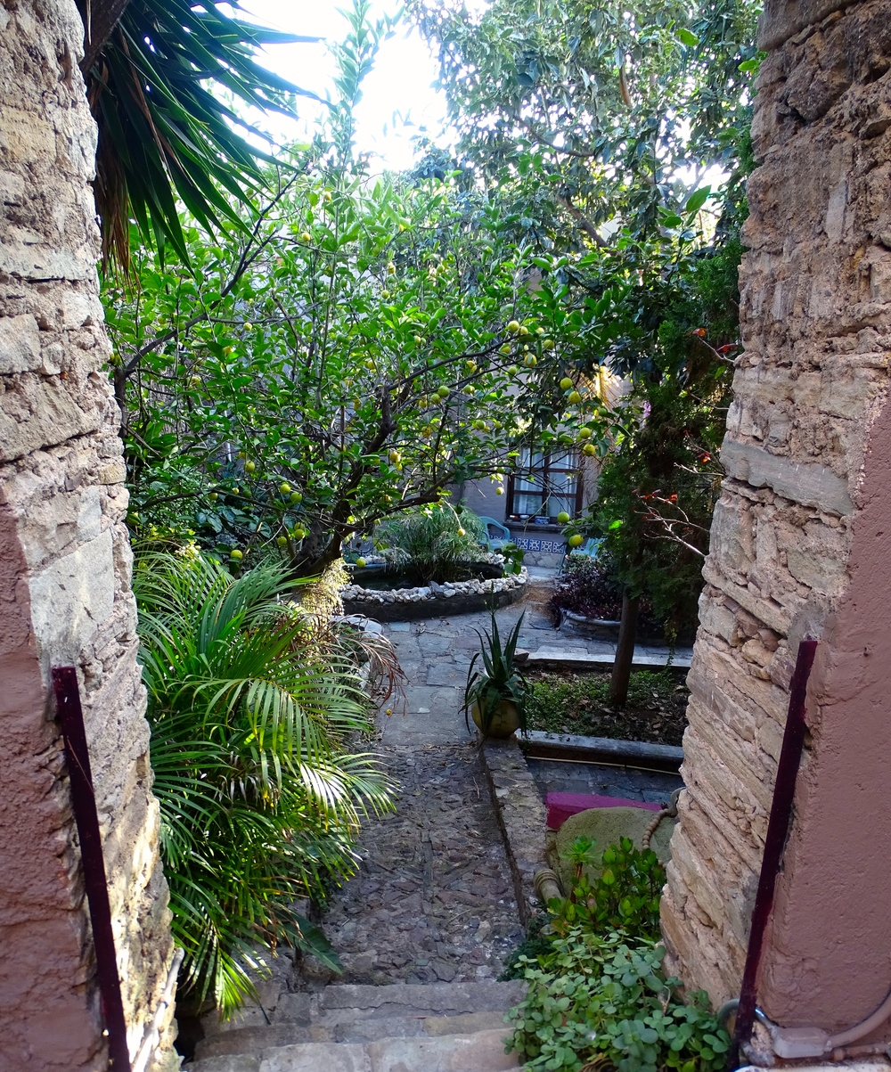 Our secret garden in the city.