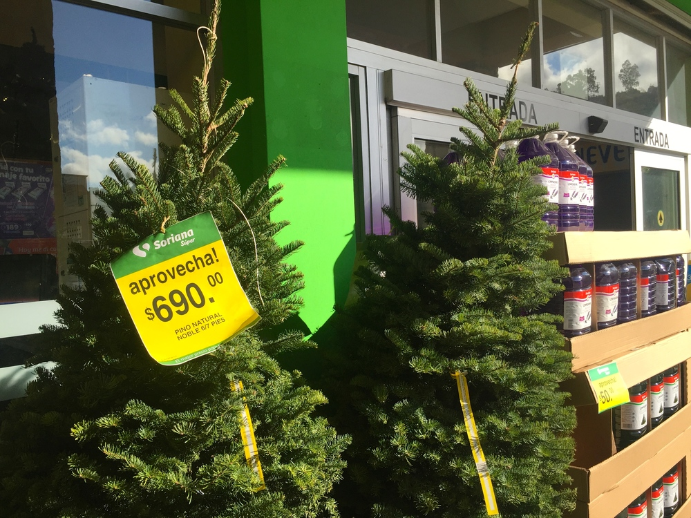 Really...Xmas trees for sale at about $43 US dollars.