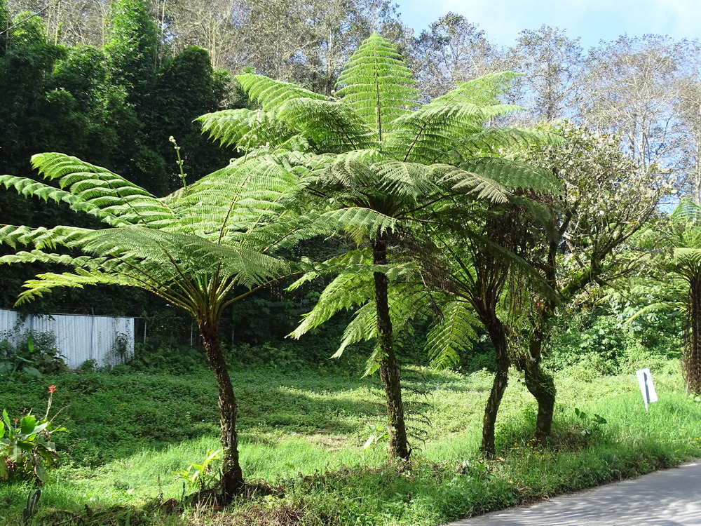 Fern Trees...who knew!?
