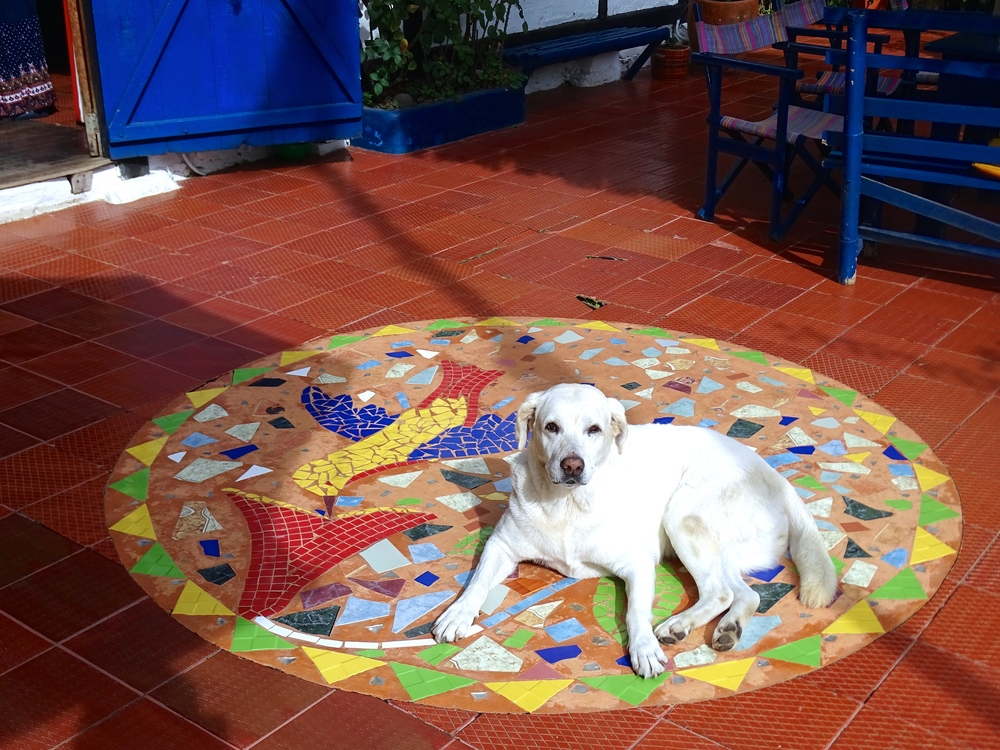 We especially love hostels with friendly dogs.
