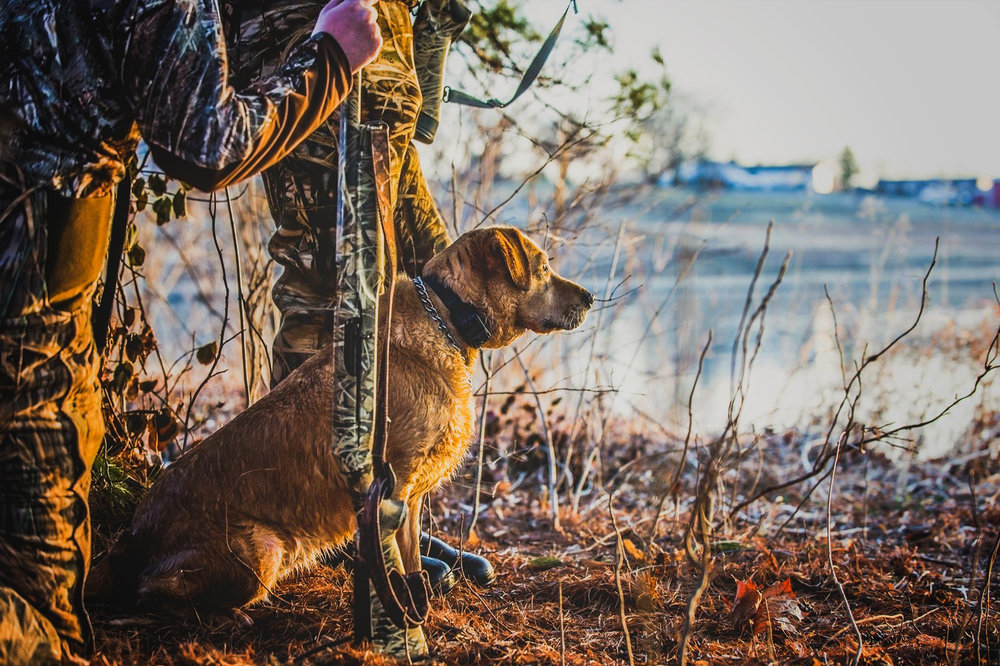 Hunt-dog.jpg