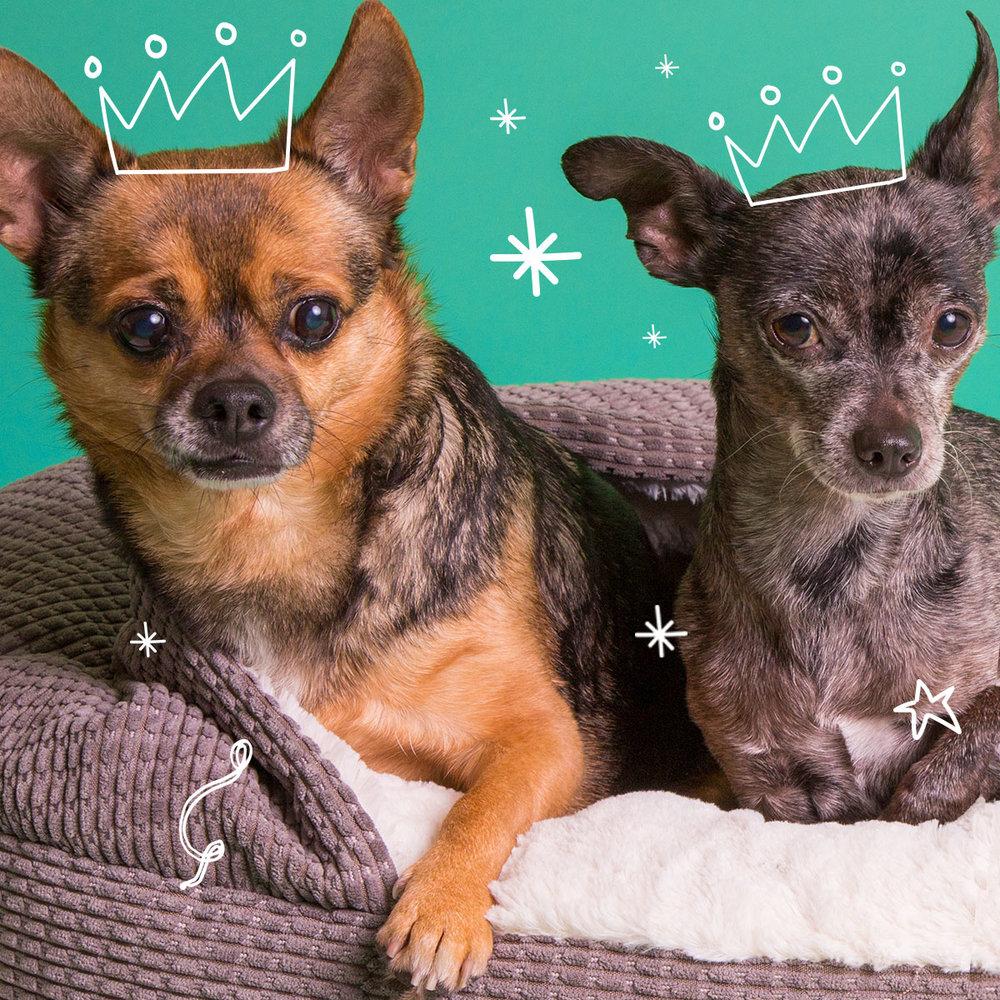10-Best-Dog-Beds.jpg