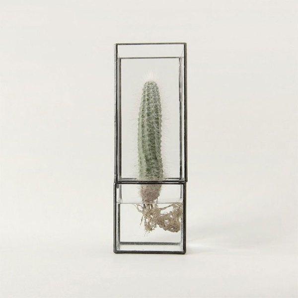 Hydro |Vaso vetro e ferro | 1012Terra | Spazio Materiae | Pianta grassa, succulenta, cactus, radici | Napoli