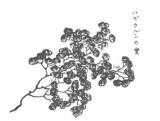 Candele lavorate a mano in Giappone | Daiyo | Spazio Materiae,Napoli | Sumac, Haze tree | Cera naturale