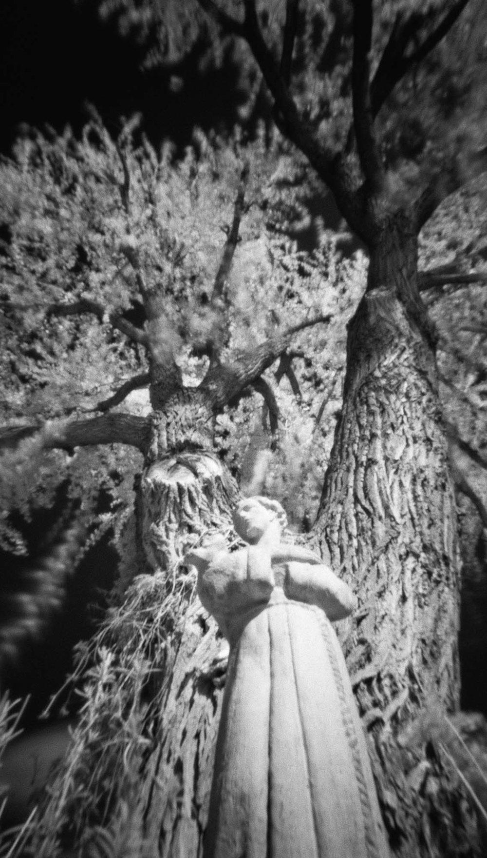 Aunt Jean's Tree