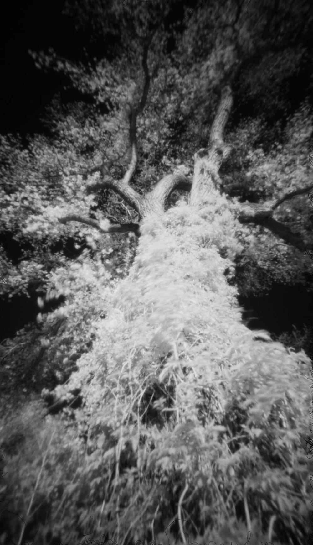 Tree- Summer