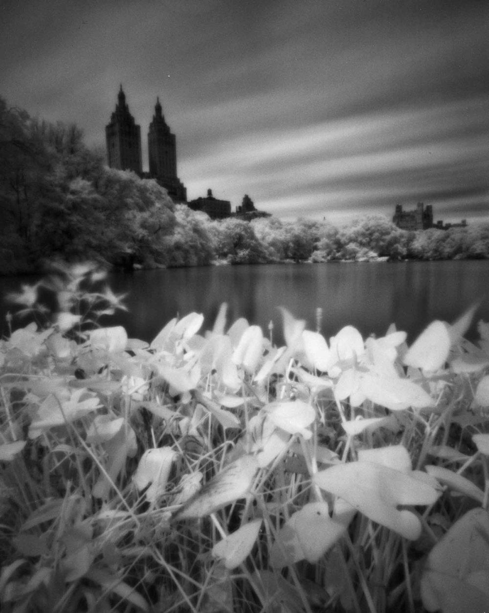 Central Park #2