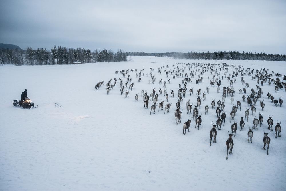 Reindeer_001.jpg