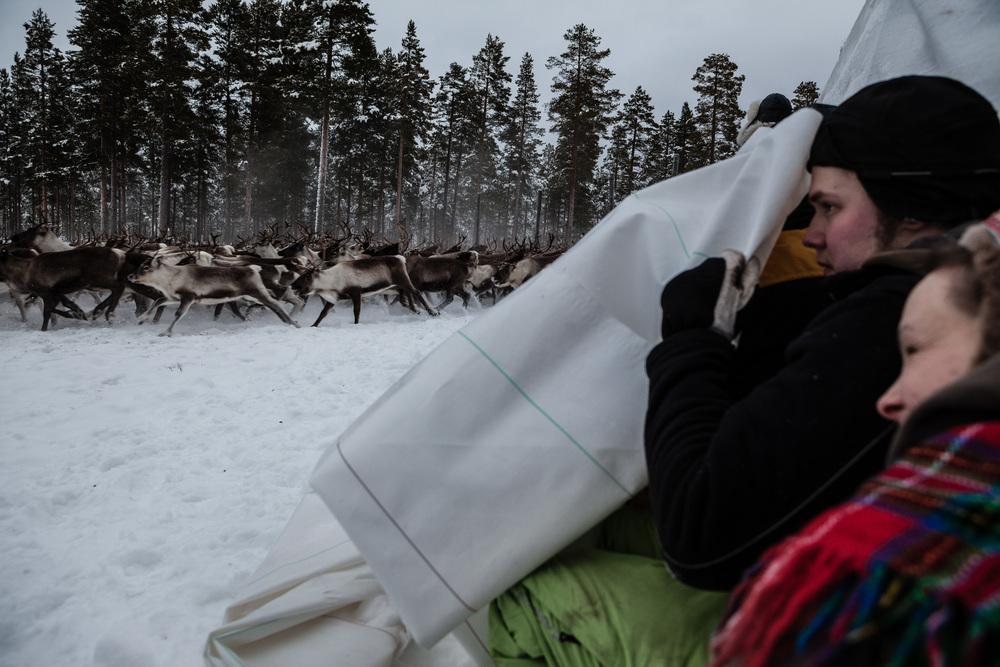 Reindeer_004.jpg