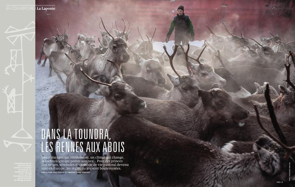 Reindeer_GEO_1-1a.jpg