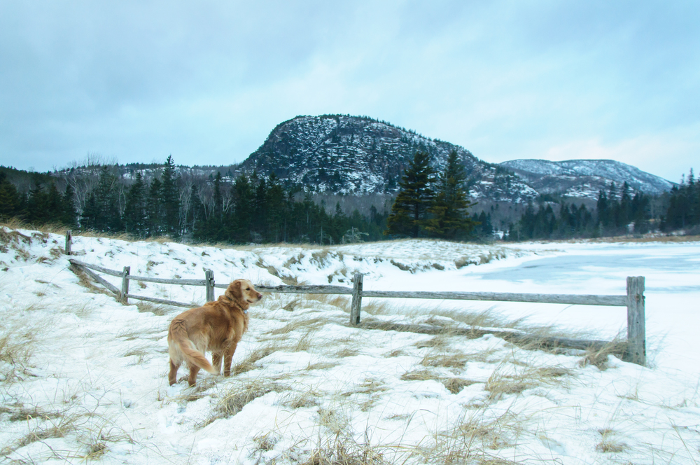 James the Adventure Dog at Sand Beach, Acadia National Park, Maine, USA January 2015